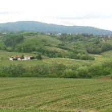 Weingärten Friaul-Julisch